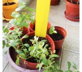 Protect your plants - 10 Yellow insect traps 10 x 25cm.