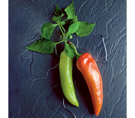 Anaheim Chili Pepper - 15 seeds