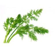 Dill 1.5gr seeds