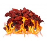 Dried Bhut/Naga Jolokia pods. Hot Peppers 10g