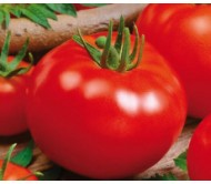 Campbell 33 Tomato Seeds 1g