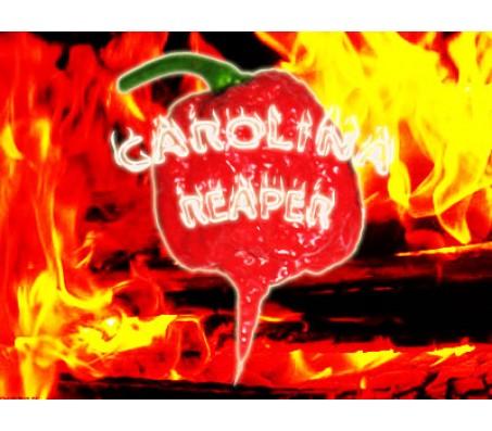 Carolina Reaper Worlds hottest pepper! 6 seeds