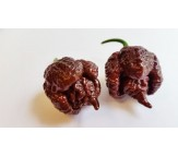 Carolina Reaper Chocolate Extremely Hot! 5 Seeds