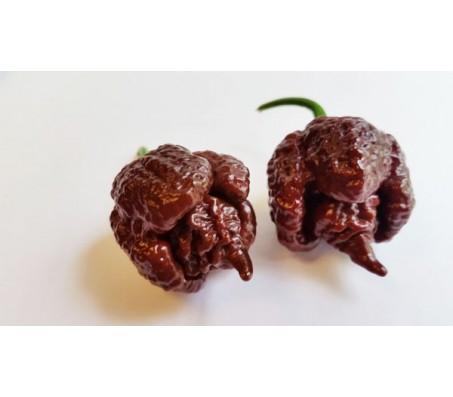 Carolina Reaper Chocolate Extremely Hot! 5 Seeds