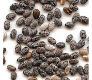 Chia Seeds (Salvia Hispanica) 40+ seeds