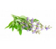 Sage (Salvia Officinalis) 0,25g seeds