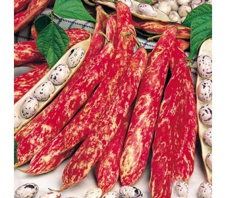 French Bean (Phaseolus vulgaris) 65g