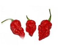 Fatalii gourmet jigsaw pepper 6 Seeds