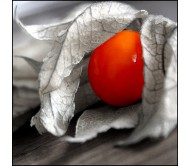 Physalis alkekengi, Lanterna cinese, 20 Seeds
