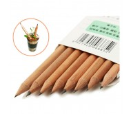 8-Pieces-Set-Sprouting-Pencil-Plant