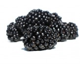 Giant Blackberry 15 Seeds