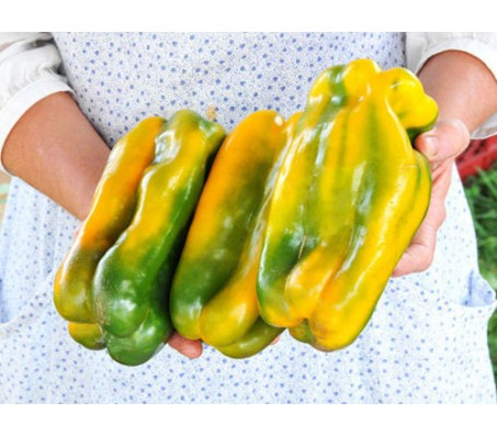 "Giant Yellow Pepper ""Monster"" 20 Seeds"