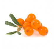Sea Buckthorn (hippophae rhamnoides) 20 seeds