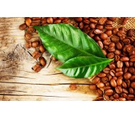 Coffee (Coffea arabica) 10 seeds