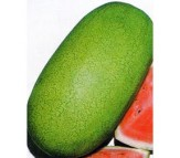 Watermelon Charleston 4gr Seeds