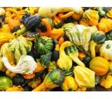 Pumpkins Ornamental 2g Seeds