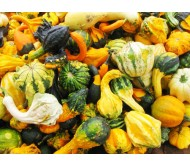 Pumpkins Ornamental 2g Seeds