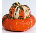 Winter Squash Turks Turban - 10 Seeds