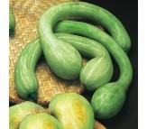 Pumpkin Albenga Trombetta seeds 4,5gr
