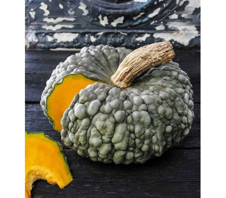 Pumpkin Squash - Marina di Chioggia 4,5g seeds