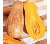 Pumpkin (Curcubita Moschata) Butternut Bell Seeds