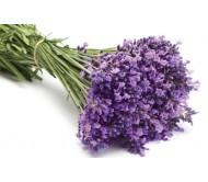 Lavender seeds 20+ seeds