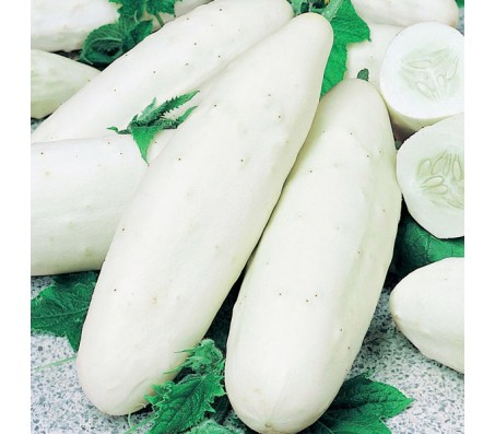 White Cucumber 4gr Seeds