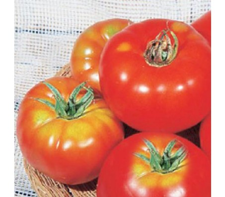 Tomato Marmade 1,5gr