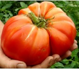 Tomato Beefstake Mortgage Lifter - 20 Seeds