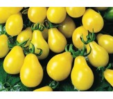 Yellow Tomato (Yellow pear/cherry Bell) 30 Seeds