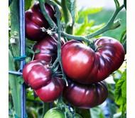 Tomato Brandywine black 40 Seeds Organic