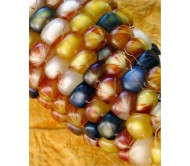 Multicolored Corn (Mais, Zea Mays) 4g Seeds