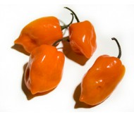 Orange Habanero Hot Pepper 10 seeds!