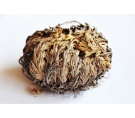 Rose of Jericho - Resurrection plant - 1 Piece