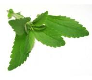 Stevia 25 Seeds (Stevia Rebaudiana)