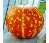 Tiger Melon - 10 seeds