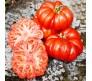 Tomato fiorentino (lycopersicon esculentum) 0,5gr seeds