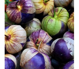 Tomatillo Purple (Physalis ixocarpa) 20 Seeds