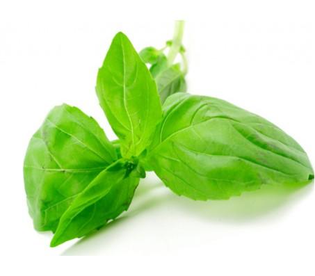 Basil Seeds 0.25g