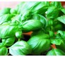 Basil wideleaved Seeds 2,5g