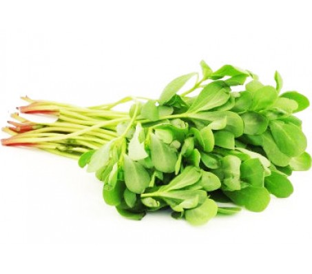 Purslane (Portulaca oleracea) 3g Seeds